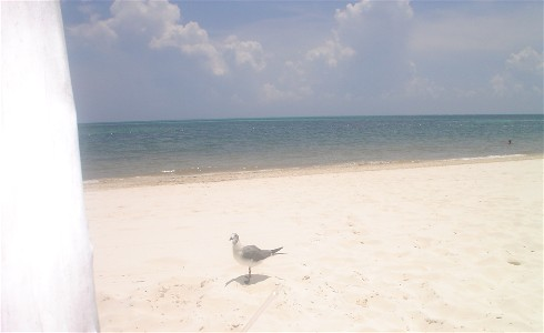 cancun beaches bird